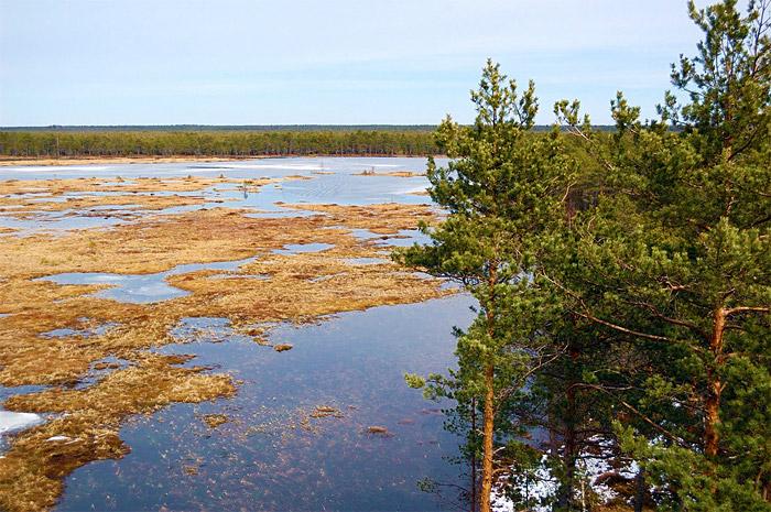 посуточно болота и их тайны выбор